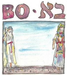 Bo - Zeichnung