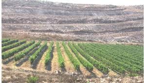 #6 Das Herzland von Israel - Neues Leben für einen Weinberg