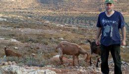 DIe ersten neuen Ziegen nach dem Raub