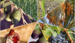 Gesundheit, Sehnsucht und eine tiefere Beziehung - Wie sieben Früchte dein gestliches Leben stärken! (Teil 3)
