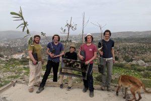 Baumpflanzung  in Samaria