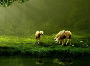 Juda & Ephraim 8 - Die Zehn Stämme heute