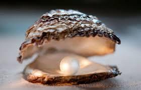 Die Auster und die Perle