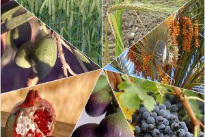 Gesundheit, Sehnsucht und eine tiefere Beziehung – Wie sieben Früchte dein gestliches Leben stärken!