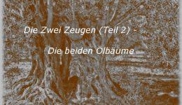Die Zwei Zeugen (Teil 2) – Die beiden Ölbäume