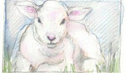11-43-50-Vayikra-Zeichnung-300x290-1