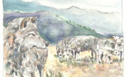 wolf-schaf-oboth2-web