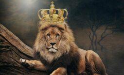 king-3832148_1280